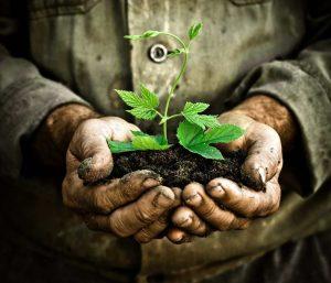 Uttarakhand CM inaugurates 'Smriti Van' on Harela festival, urges people to plant saplings