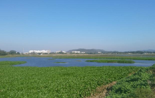 Deepor Beel Wetland: Only Ramsar site in Assam